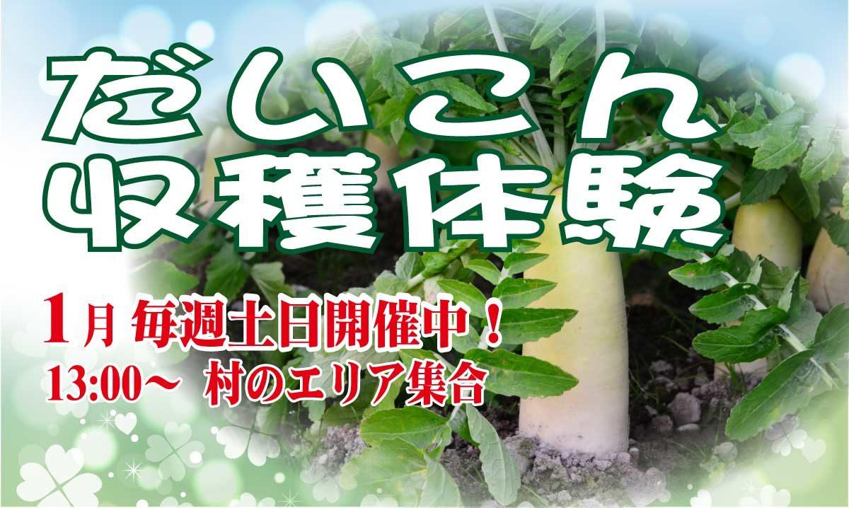 daikon-syuukaku1280_718