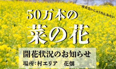 菜の花バナー1200×718