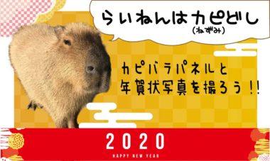 謹賀新年カピと写真②1200