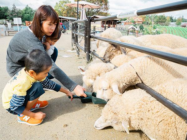 羊のエサやり体験